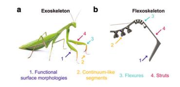 """加州大学的研究人员使用3D打印创建""""类似于昆虫""""的软机器人"""