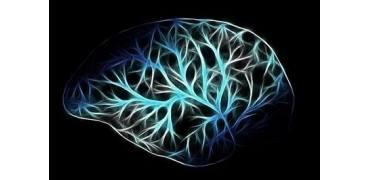 CellRep:3D打印大脑结构揭示神经回路结构
