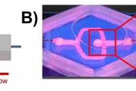 LLNL研究人员对活体动脉瘤进行生物3D打印并观察其在术后的愈合情况