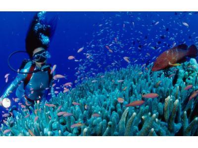 网速快慢也影响营商环境?海南将建国际海底光缆站点,全岛覆盖5G网络